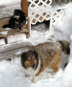 chase-kendal-snow1