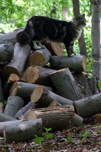milo-wood